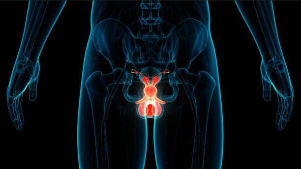 prevenire-le-malattie-della-prostata-stile-di-vita-cosa-fare-fumo-alcol-alimentazione